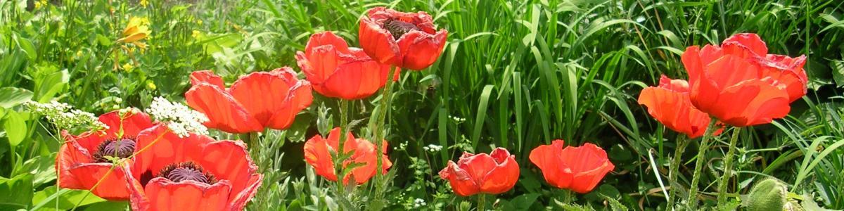 Inspiration til haven